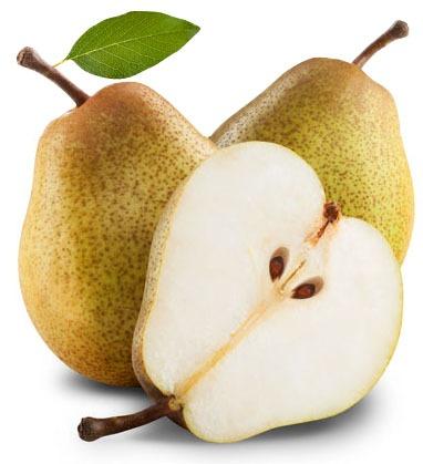 pear picking ct