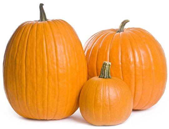 pumpkin picking ct